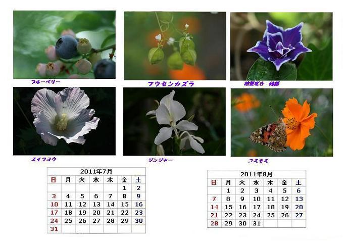 7-8お花ブログ用.JPG